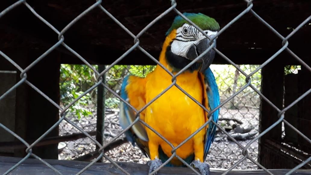 Pandemia diminui doações e coloca em risco reserva ambiental no AP com mais de 300 animais