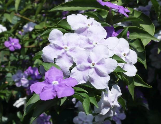 Plantas ornamentais venenosas: conheça 5 espécies tóxicas que exigem cuidados especiais (Foto: Divulgação)