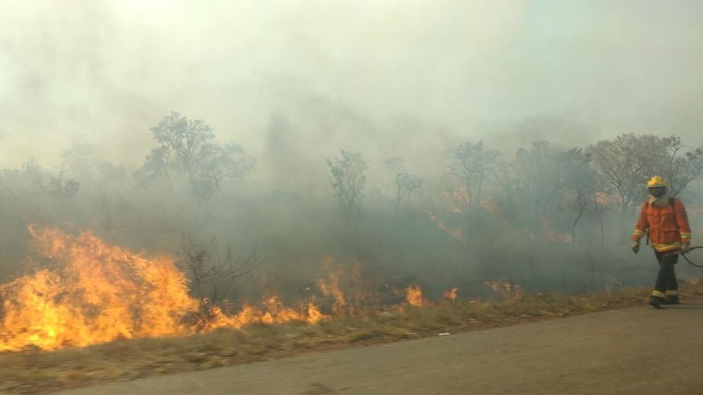 Fogo atinge mata próxima à reserva da Embrapa Cerrados, no Distrito Federal (Foto: Rafaela Céo/TV Globo)