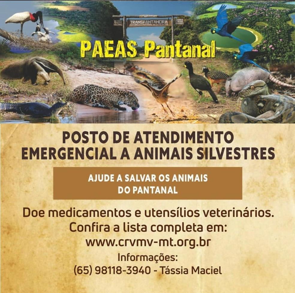 Posto de Atendimento Emergencial a Animais Silvestres — Foto: Arquivo Pessoal