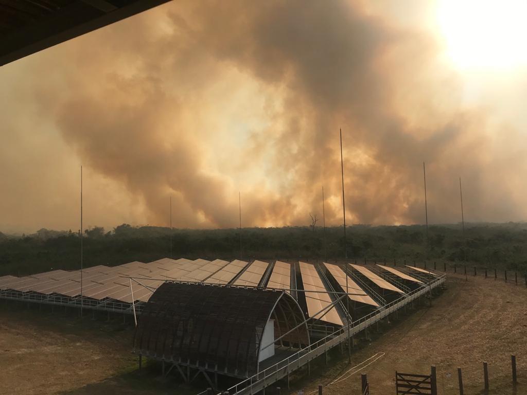Pantanal tem 100 mil hectares destruídos por queimadas que começaram há 10 dias em MT