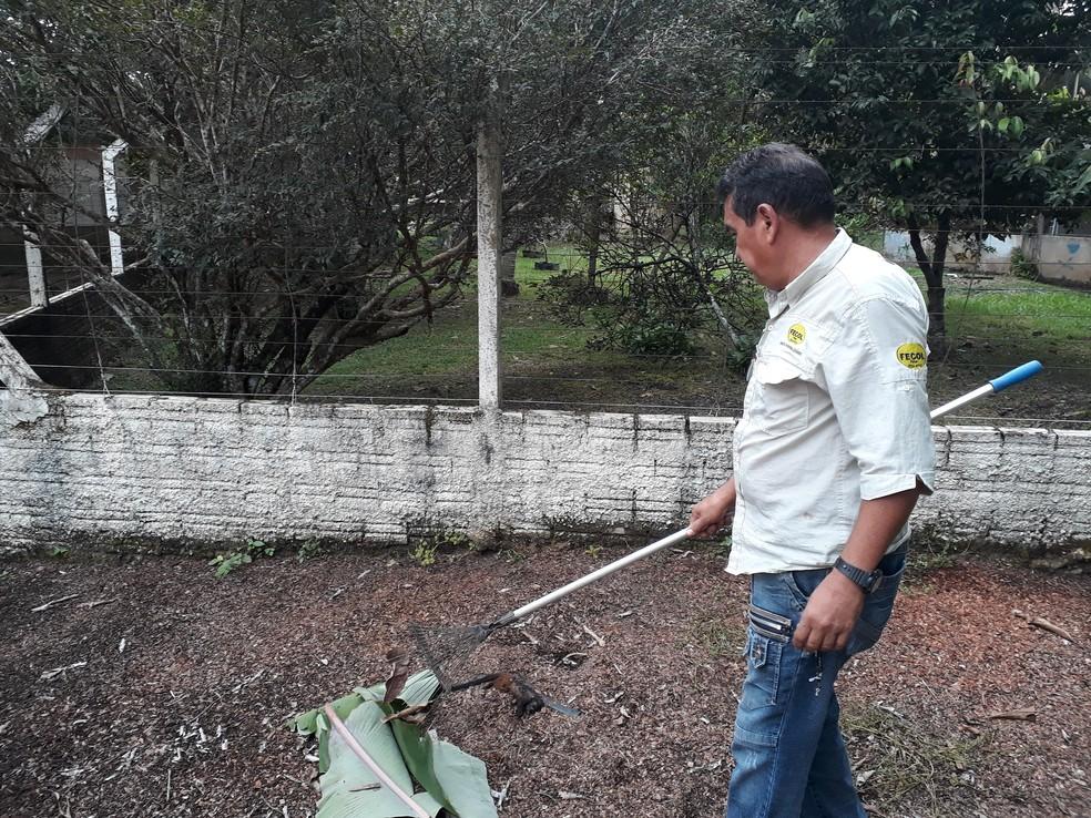 Dono da chácara encontrou o macaco no domingo, mas o animal só foi retirado na segunda (Foto: Pedro Bentes/ G1)
