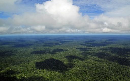 Floresta Amazônica pode parar de absorver CO2 em 15 anos