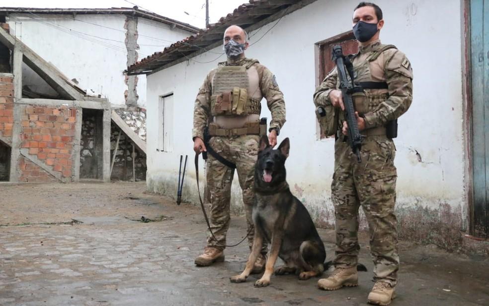 Cães farejadores do COE auxiliaram na busca por drogas — Foto: Alberto Maraux/SSP-BA
