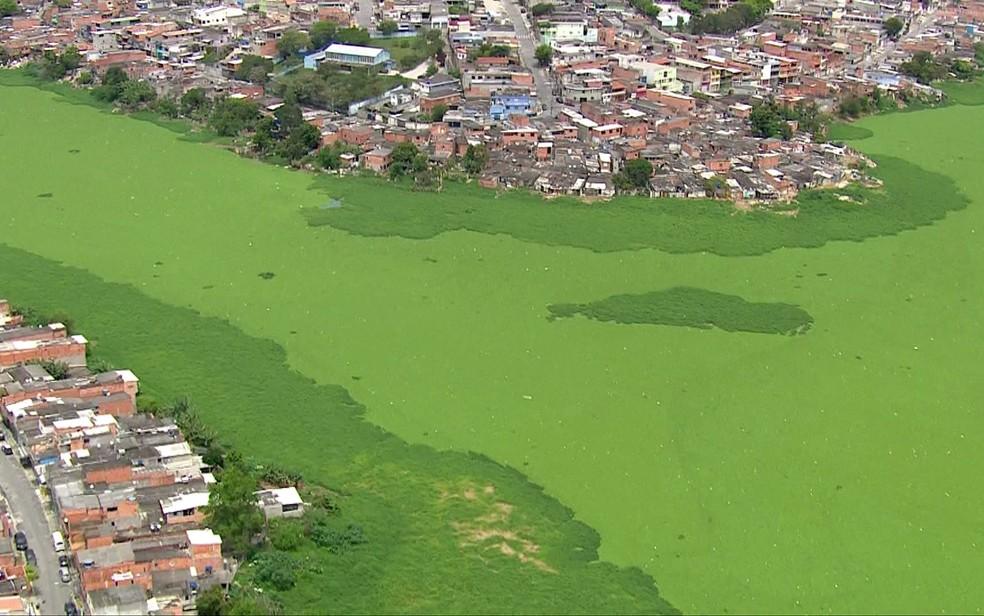 Tapete de algas na Billings, em São Paulo — Foto: Reprodução/TV Globo