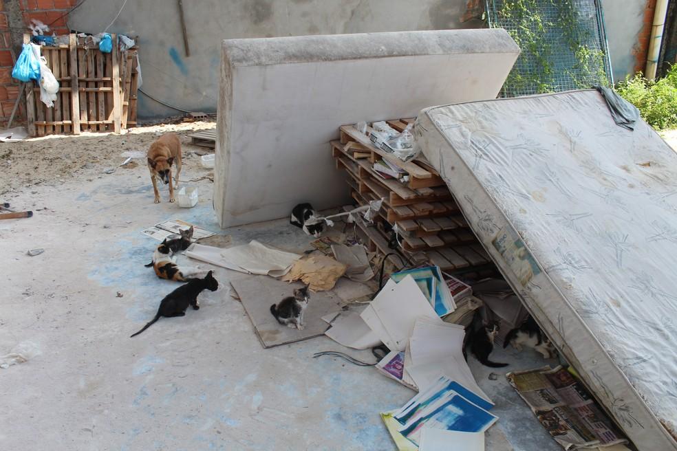 Polícia afirma que quase cem animais foram encontrados (Foto: Rickardo Marques/G1 AM)