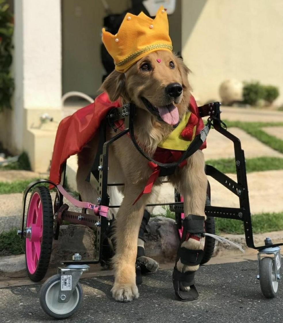 Olívia é famosa nas redes sociais por compartilhar o dia a dia de uma cachorra paraplégica — Foto: Eduardo Palota/Arquivo pessoal