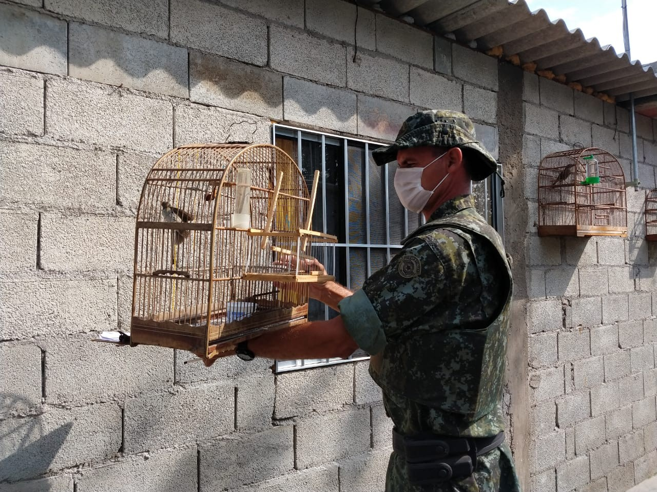 Homem é multado em R$ 4,2 mil ao ser flagrado com aves silvestres em Itanhaém, SP