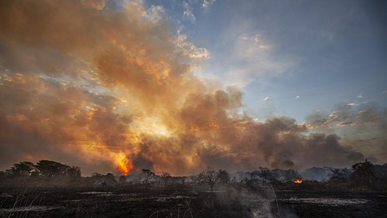 Incêndio queima quase mil hectares no Pantanal desde sábado (7) (Foto: Ivan Canabrava/Illuminati Filmes/IPAM)