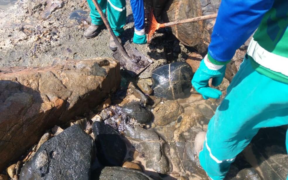 Manchas de óleo retornam à Pedra do Sal, em Salvador — Foto: Divulgação/Limpurb