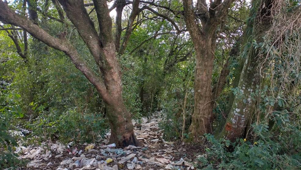 Corpo foi encontrado em uma área de matagal, em Ponta Grossa — Foto: Paulo Martins/RPC