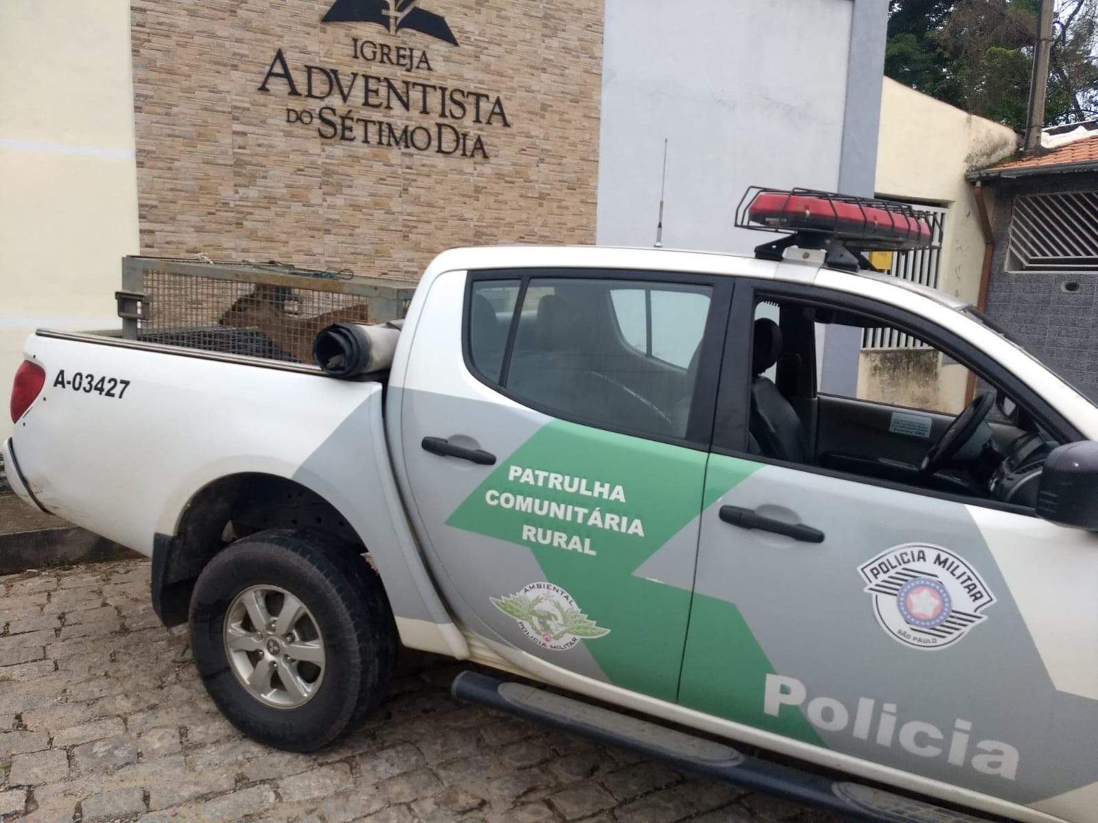 Veado-mateiro é resgatado em igreja e devolvido à natureza em Queluz