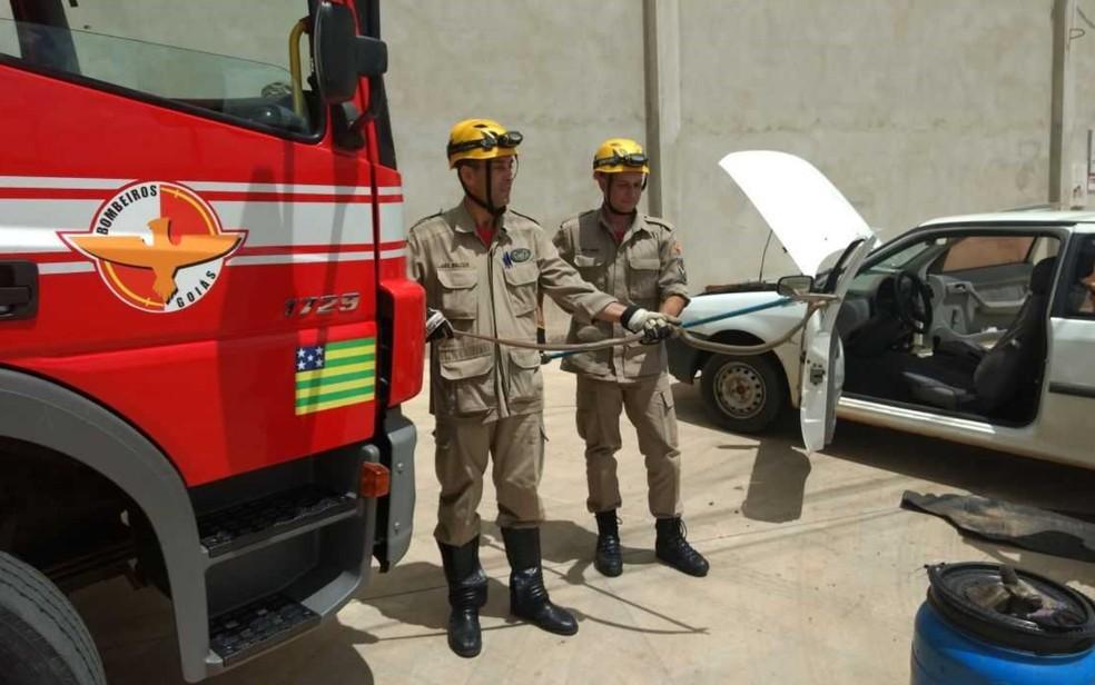 Cobra é resgatada dentro de carro após rastejar entre as pernas do motorista, na BR-153 (Foto: Corpo de Bombeiros/Divulgação)