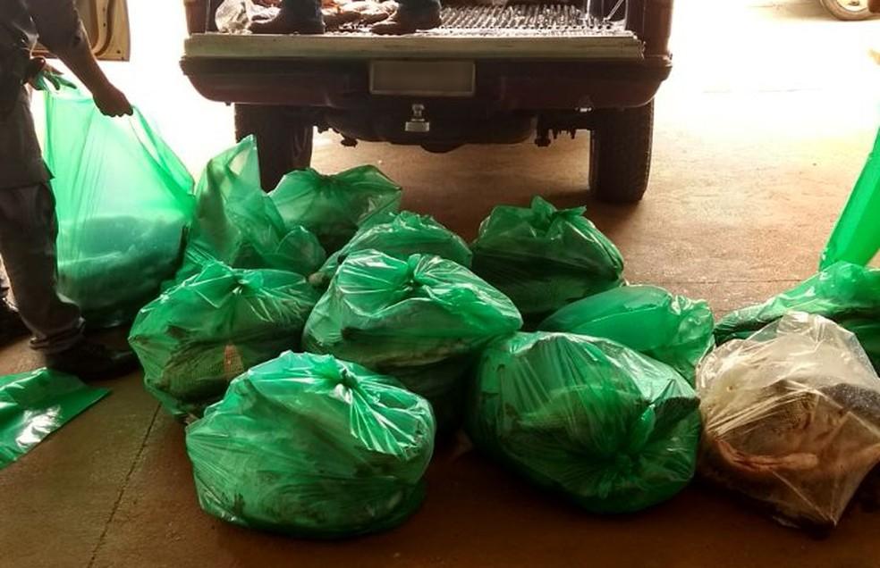 Pescados foram doados para instituições de Presidente Epitácio (Foto: Polícia Militar/Cedida)