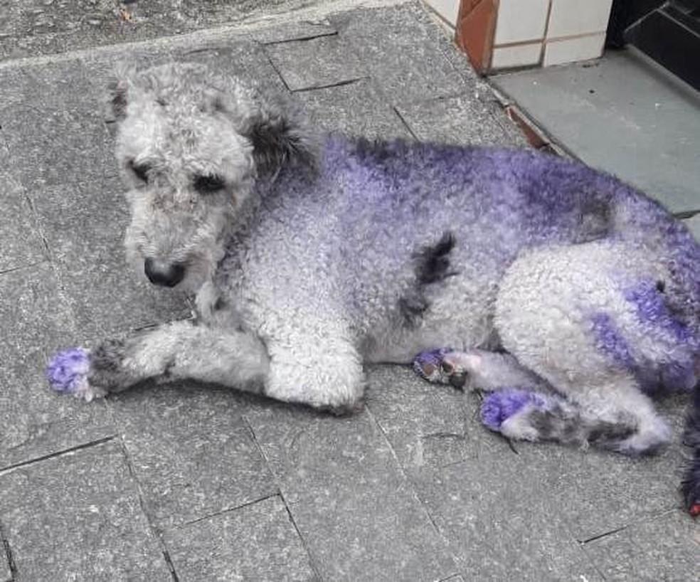Cão diagnosticado com leishmaniose em 2018 no Morro São Bento, em Santos, SP — Foto: Arquivo Pessoal