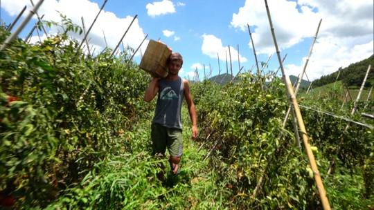 Veja como o custo da produção afasta o produtor rural do campo