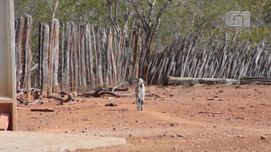 Pesquisa aponta que animais que vivem na caatinga devem se alimentar da vegetação local
