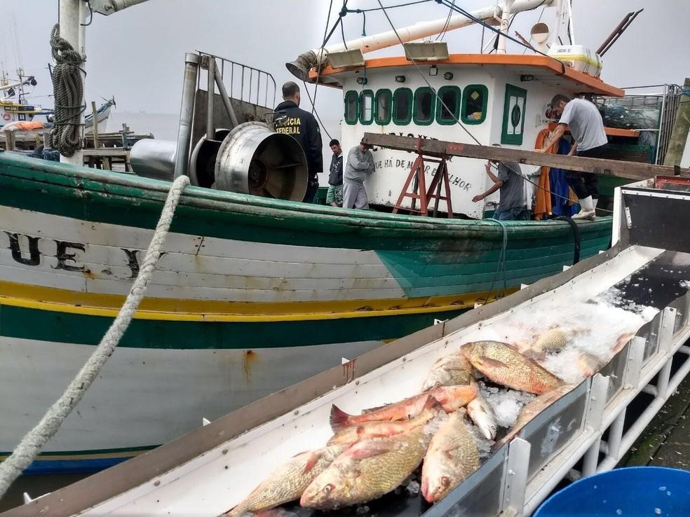 Mais de duas toneladas de curvina foram apreendidas quando barco atracou em Rio Grande (Foto: Divulgação/Polícia Federal)