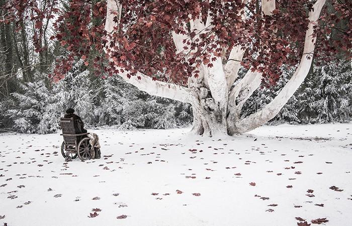 Bran visita a árvore em Winterfell (Foto: Divulgação)