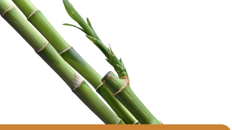 Bambu (Foto: Thinkstock)