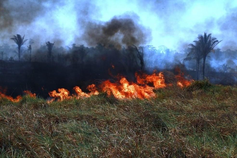 Queimada atinge vegetação em Rondônia.  — Foto: Ésio Mendes/Arquivo Pessoal