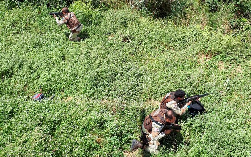 Policiais atuam na região para retirar a droga  (Foto: Divulgação/SSP)