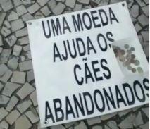 Polícia investiga denúncias contra mulher por maus-tratos de animais no Rio