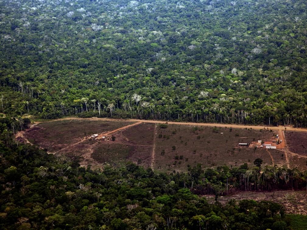 Desmatamento em Porto Velho, Rondônia. — Foto: Divulgação/Greenpeace/Marizilda Cruppe/EVE