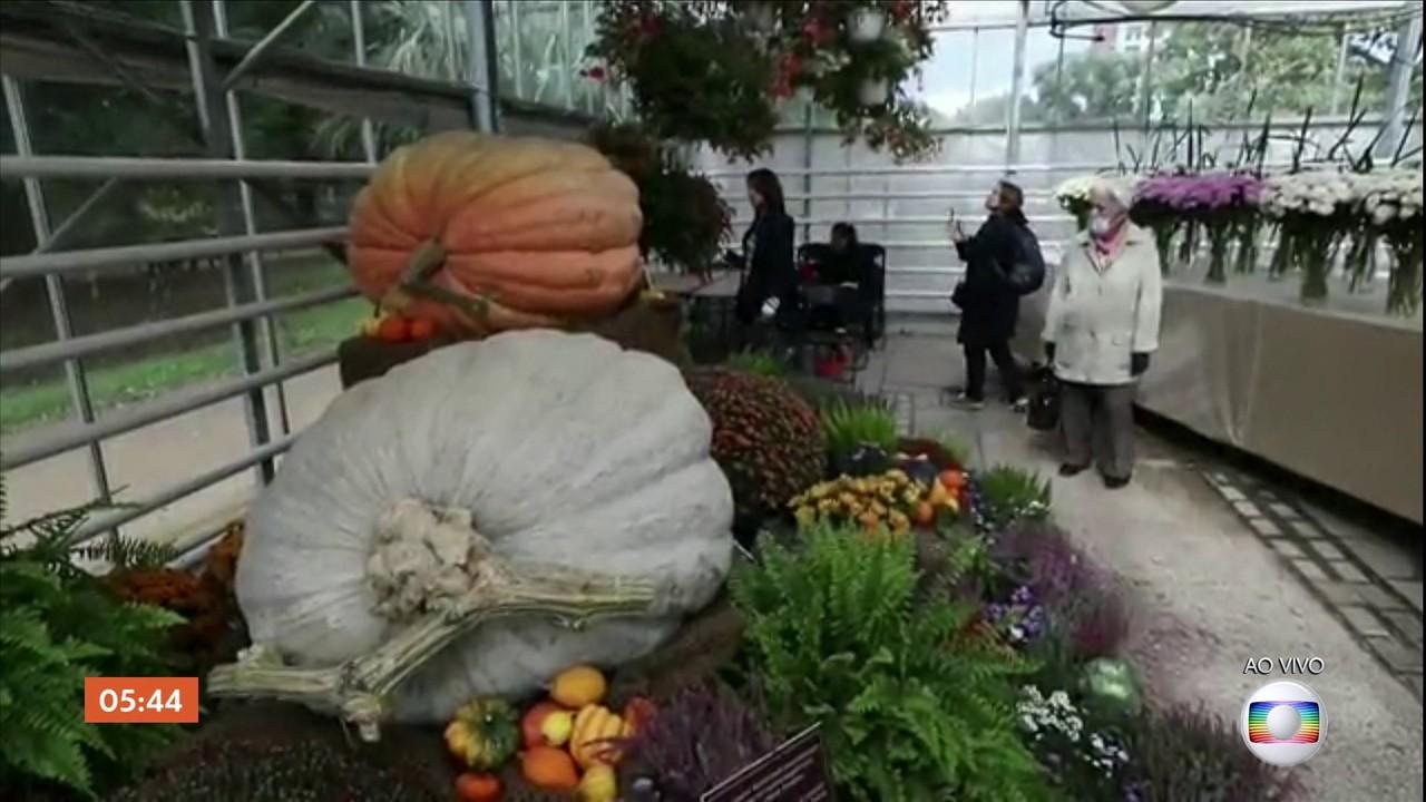 Festival de outono exibe abóboras gigantes na Rússia