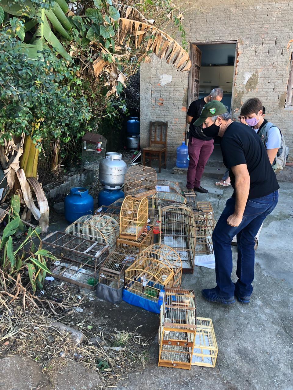 Operação apreende mais de 80 aves mantidas ilegalmente em cativeiro em Florianópolis