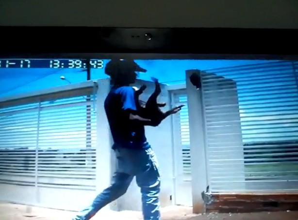 Motociclista invade casa e furta filhote de pitbull em Ourinhos; vídeo - Noticias