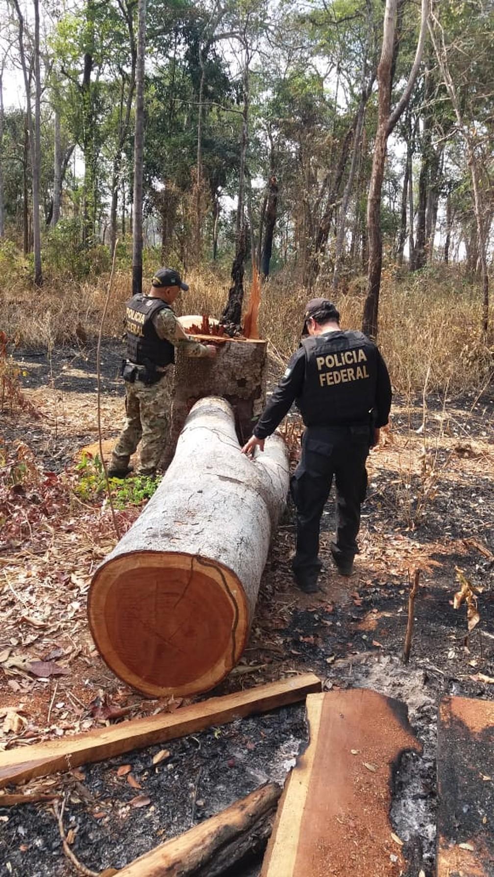 Árvores tinham sido derrubadas recentemente — Foto: PF/ Divulgação