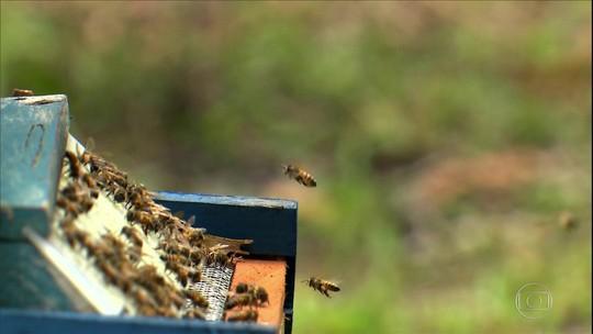 Apicultores do litoral da Bahia investem na produção de pólen