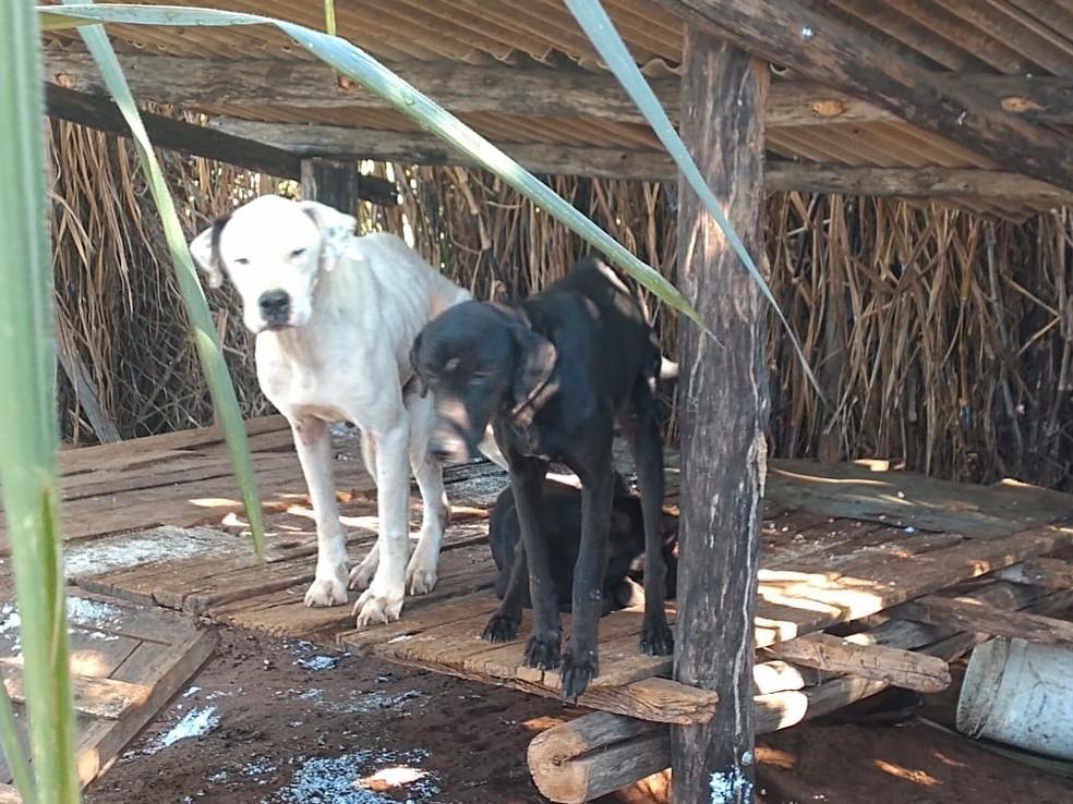 Cães foram resgatados com sinais de maus-tratos em Tupã — Foto: Polícia Militar / Divulgação