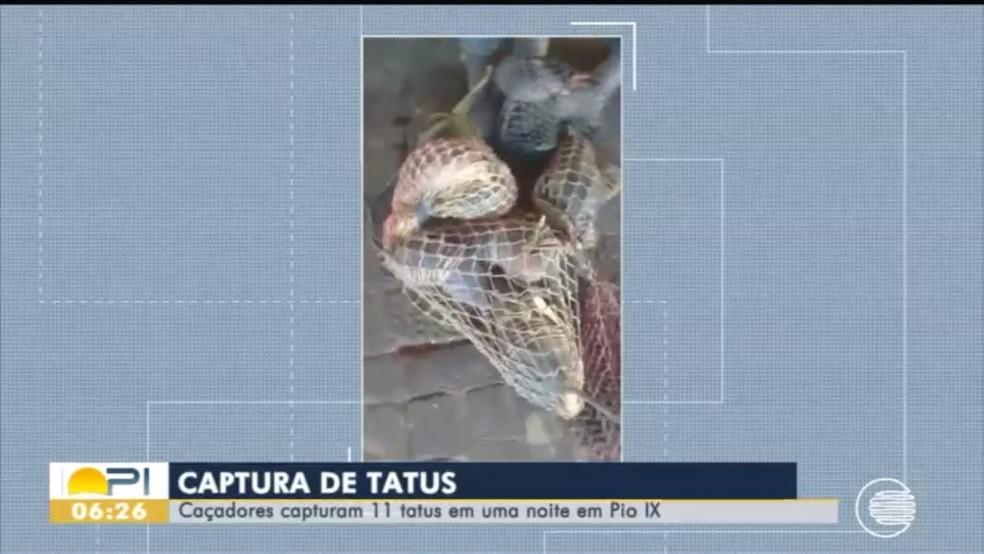 Polícia identificou pelo menos 11 tatus-peba em vídeo que resultou na investigação — Foto: Reprodução/TV Clube
