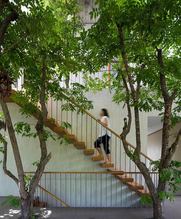 O minimalismo da arquitetura faz com que as plantas sejam protagonistas (Foto: Hiroyuki Oki/ Dezeen/ Reprodução)