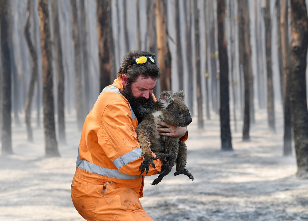 Resgatistas socorre um coala de uma floresta queimada perto de Cape Borda em Kangaroo Island, sudoeste de Adelaide, na Austrália — Foto: David Mariuz/AAP Image via Reuters