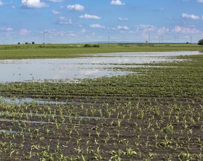 Primavera deve ter chuvas dentro da média histórica nas regiões produtoras do Brasil