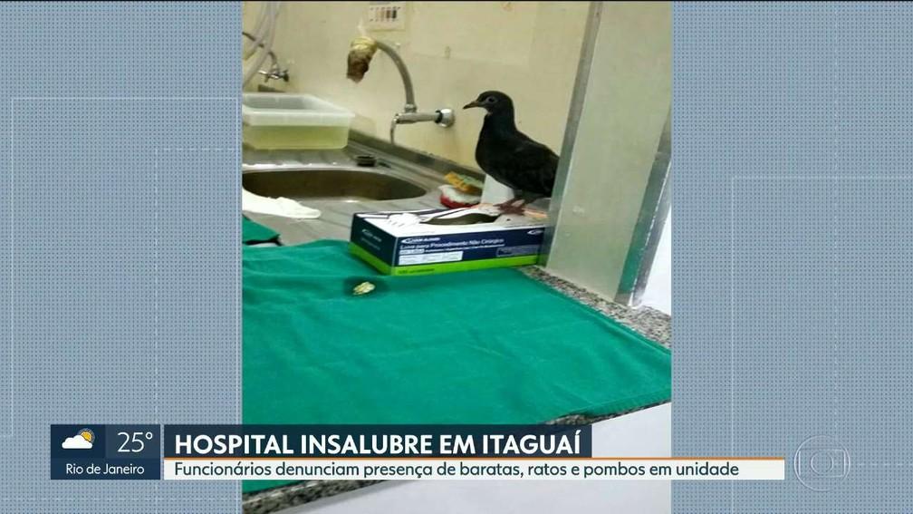 Pombo é flagrado ao lado de luva em hospital de Itaguaí — Foto: Reprodução/TV Globo