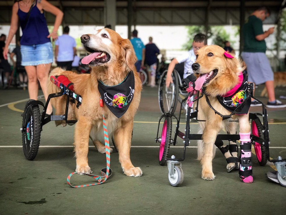 Troy e Olívia receberam cadeiras de rodas do projeto — Foto: Arquivo pessoal