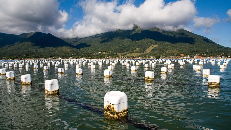 como-criar-mexilhoes-molusco-mexilhao (Foto: Edson Junkes/ Editora Globo )