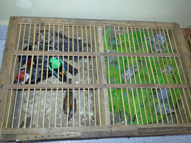 Aves estavam escondidas em pequenos viveiros (Fot Capitão Edmilson Castro/Polícia Militar)