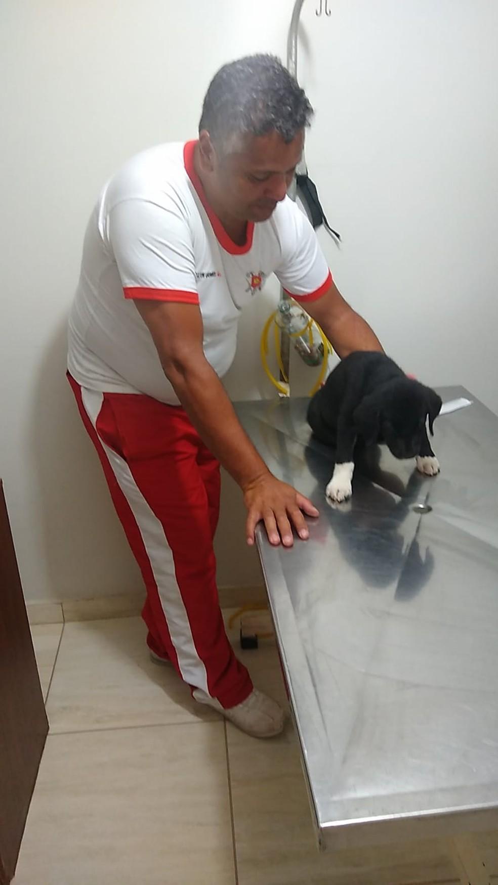 Bombeiros levaram filhote de labrador atropelado para clínica veterinária, no DF — Foto: Arquivo pessoal