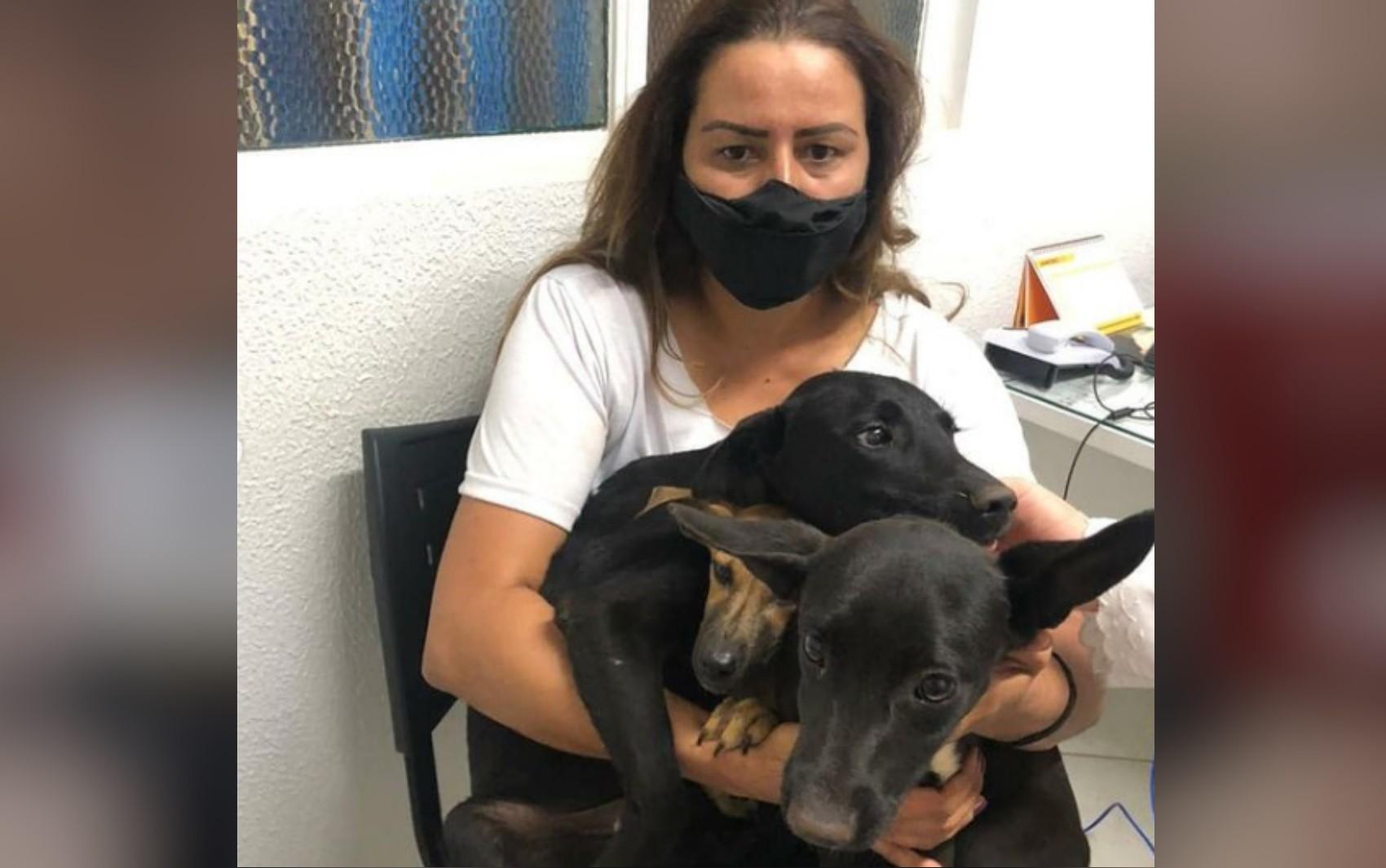 Homem agride os próprios cães e patos com fios de energia, denuncia advogada