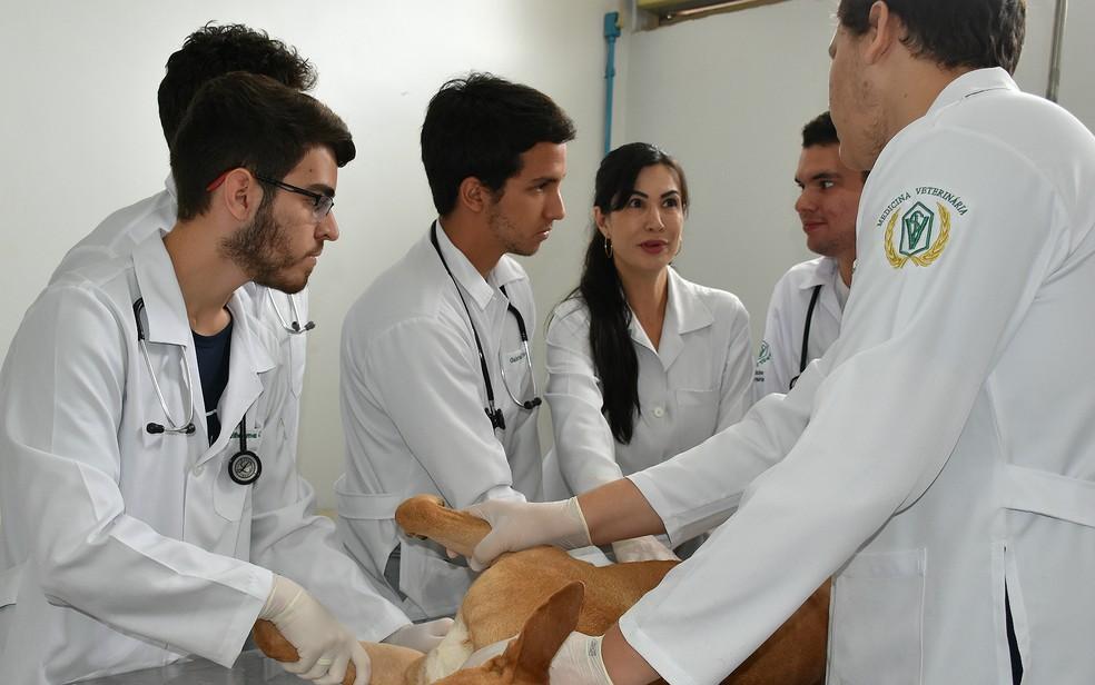 A professora Roberta Casale orienta os alunos no Centro Universitário Moura Lacerda em Ribeirão Preto — Foto: Juliano Gonçalves/G1