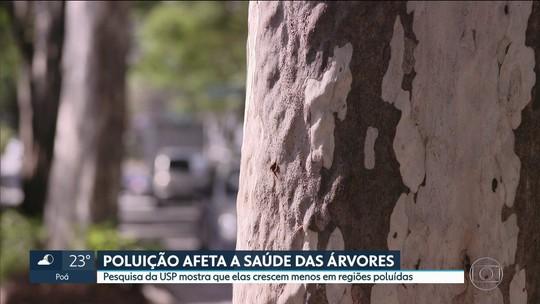 Pesquisa da USP mostra que árvores crescem menos em regiões mais poluídas