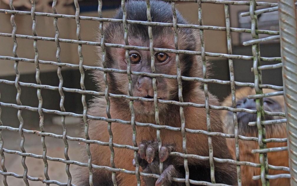 Sagui em recuperação no CRAS (Centro de Recuperação de Animais Silvestres) do Parque Ecológico Tietê, na Zona Leste de São Paulo — Foto: Deslange Paiva/G1