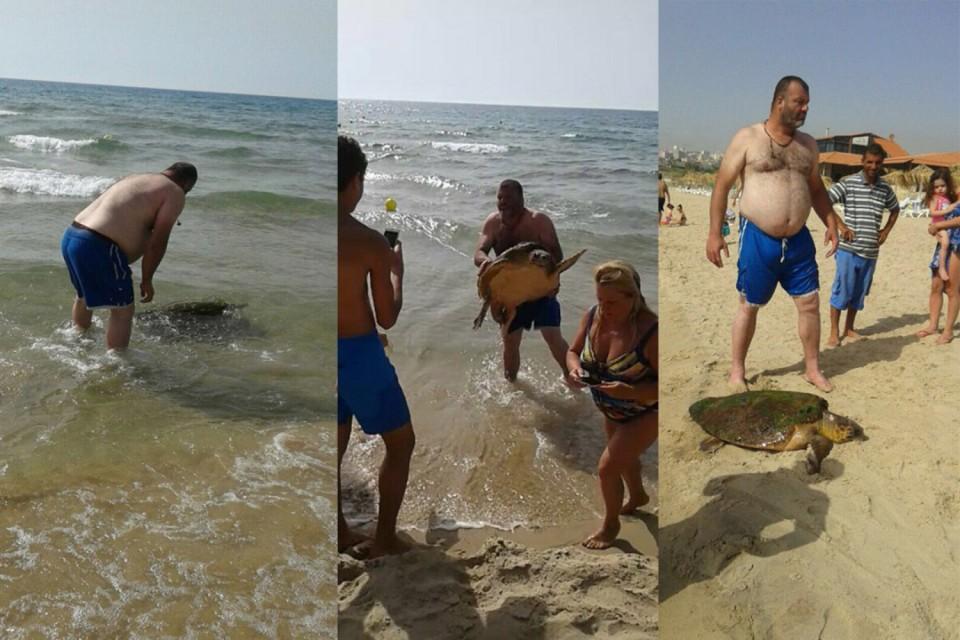 Tartaruga é tirada do mar no Líbano