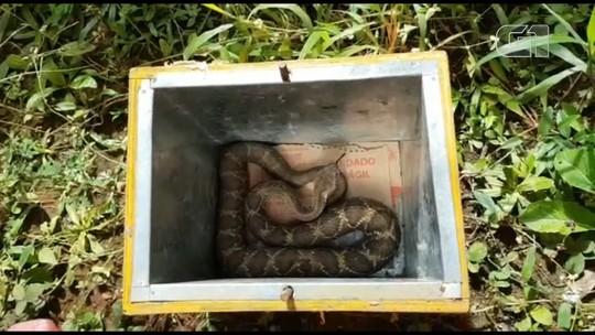 Polícia Ambiental apreende 13 cobras em viveiro clandestino, em Teixeira Soares