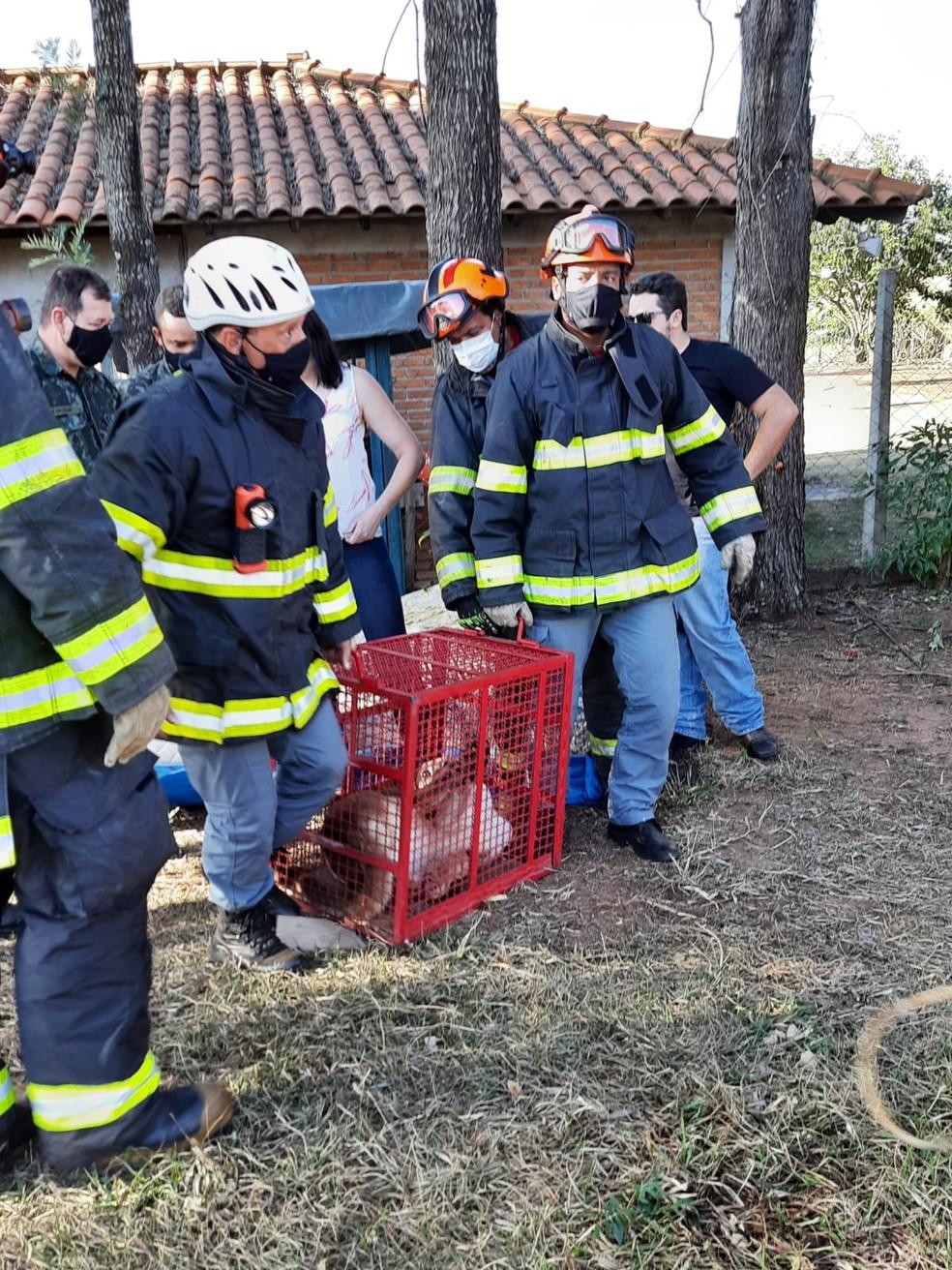 Resgate de onça parda de árvore em chácara na zona rural de Marília (SP) durou cerca de 5 horas — Foto: Anderson Camargo/ TV TEM